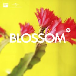 covers various spotifyblossom